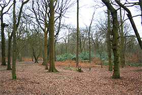 New Parking Charges Introduced at Haigh Woodland Park